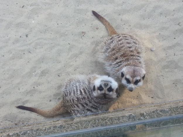 """""""Ehi, John! Hai visto quanto è strano il primate che ci sta guardando??"""""""